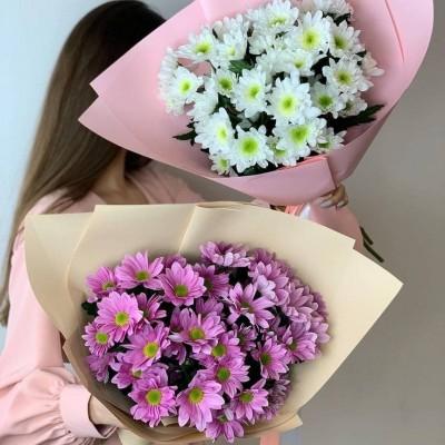5 розовых хризантем